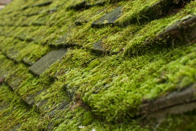 Roof moss removal service in the South East