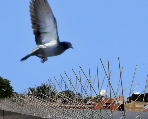 Bird protection in the South East