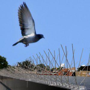 Bird Prevention